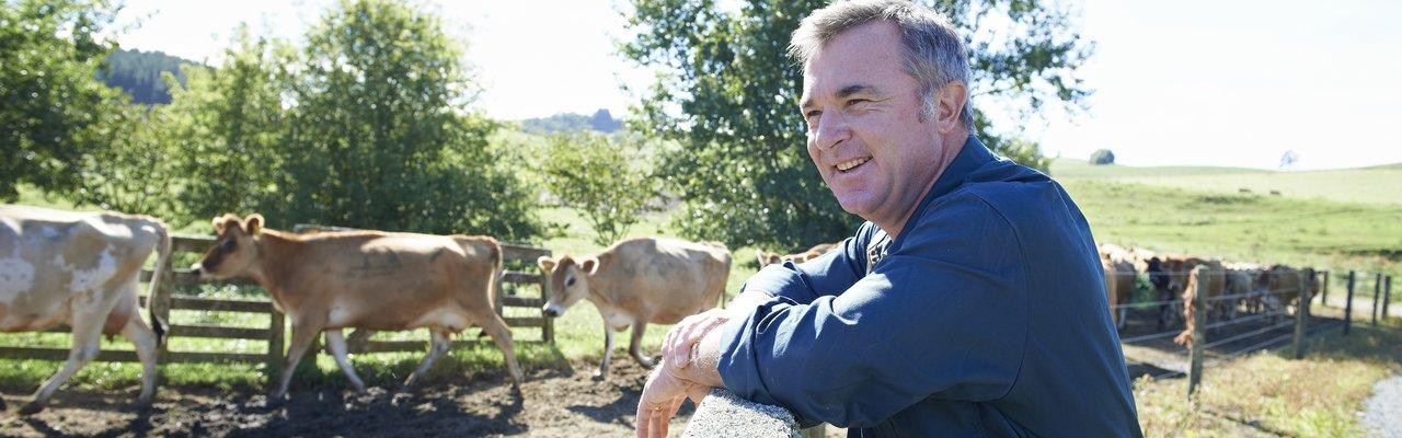 Farmer watching cows
