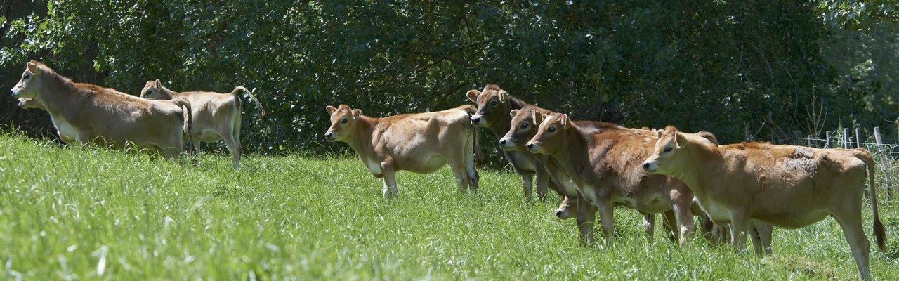 Calf Club