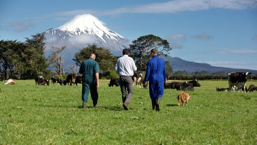 FSM walking with farmers in Taranaki