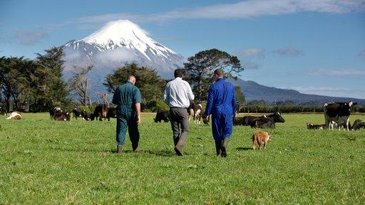 FSM walking with farmers in Taranaki