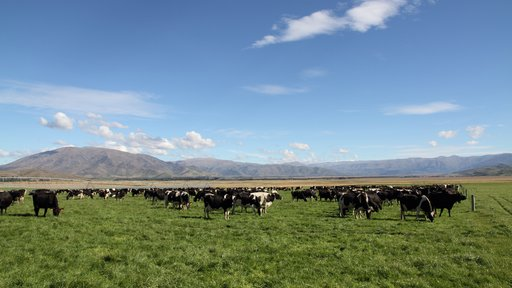 South Island dairy farm