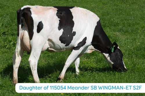Daughter of 115054 Meander SB WINGMAN-ET S2F