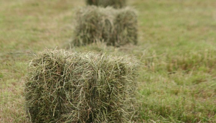 Hay making summer news