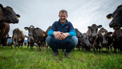 Reece Swan cows surrounding pic