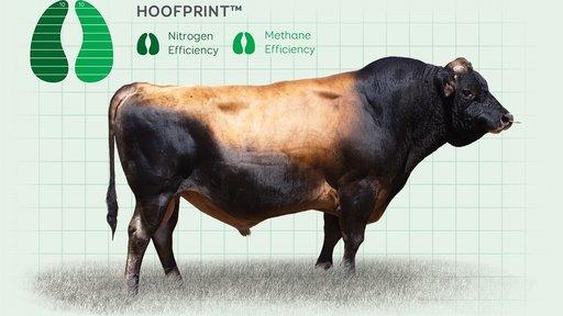 LIC Hoofprint