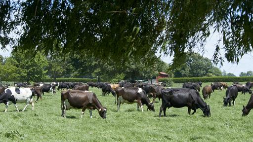 Cows Innovation Farm