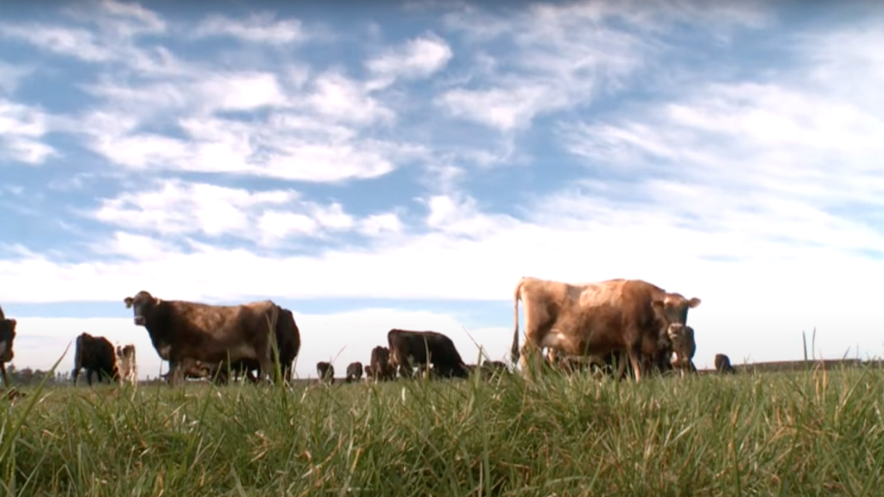Resilient Dairy video