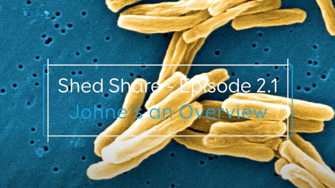 Shed Share JD 1