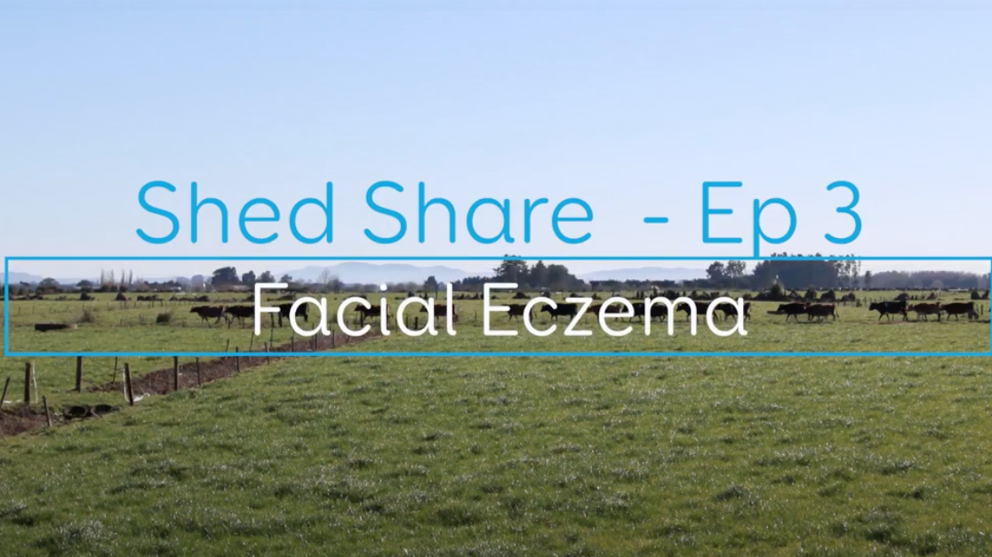 Shed Share Facial Eczema