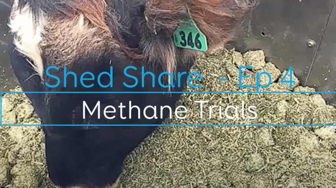 Shed Share Methane production