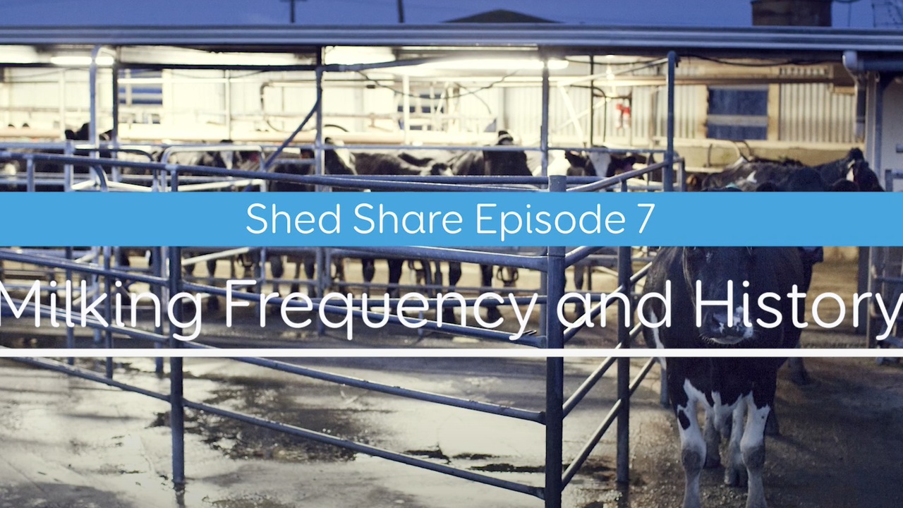 Shed Share - milking frequency
