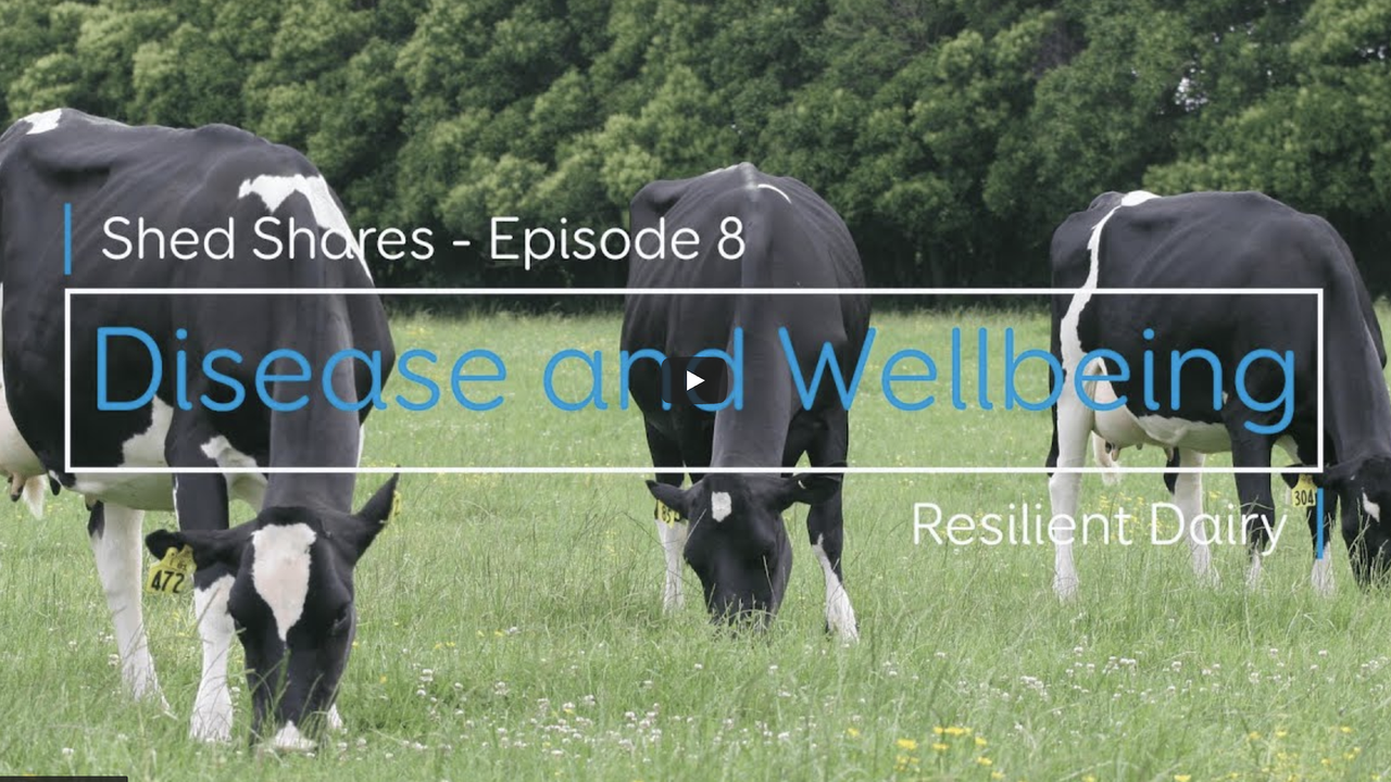 Shed Share - Disease and wellbeing