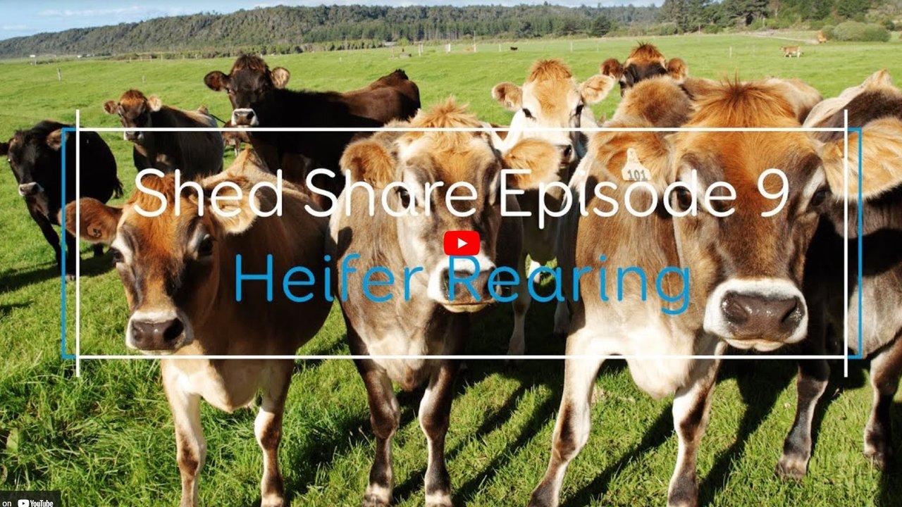 Shed Share Episode 9.JPG