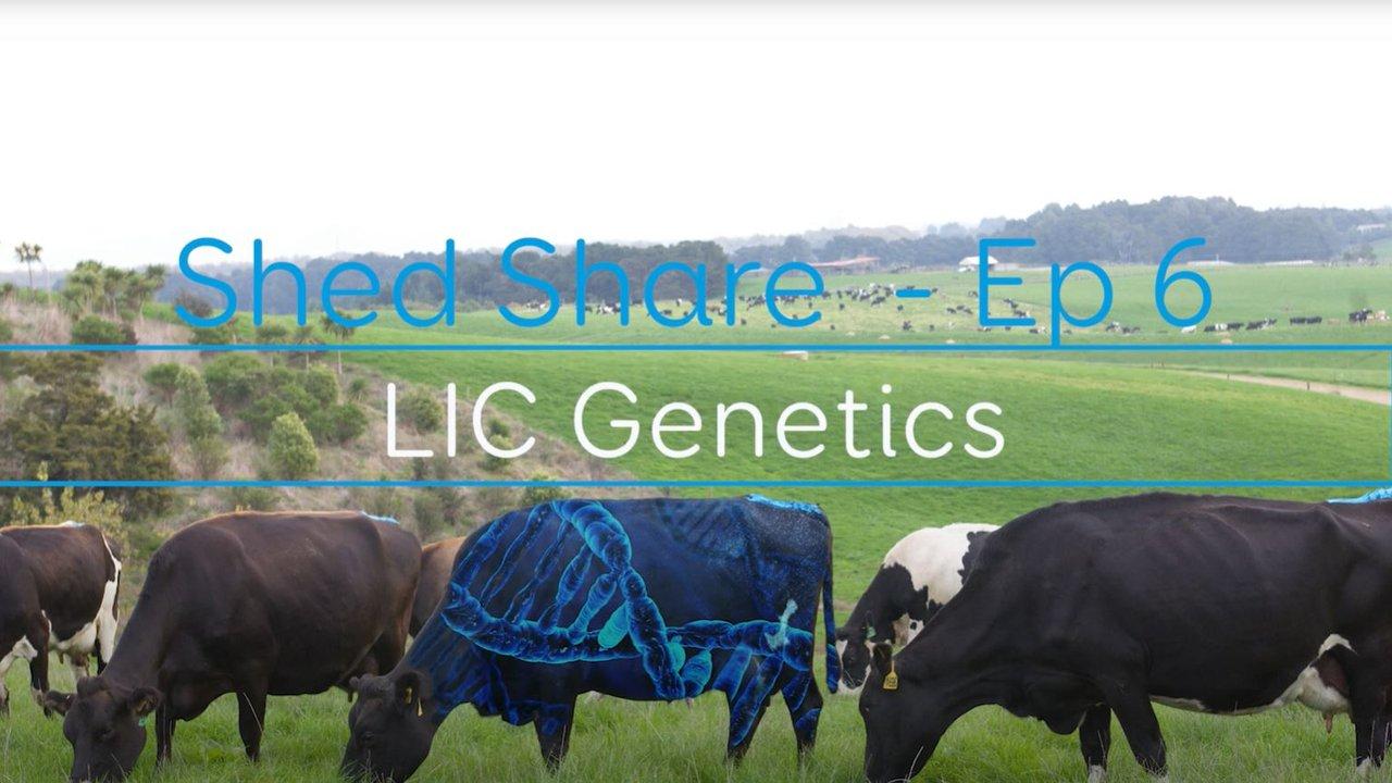 Shed Share LIC Genetics.JPG