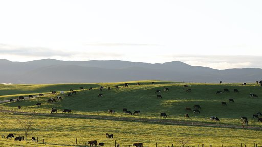 Kiwicross hillside