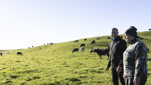 Wairarapa Farm Image