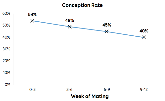 Conception rate
