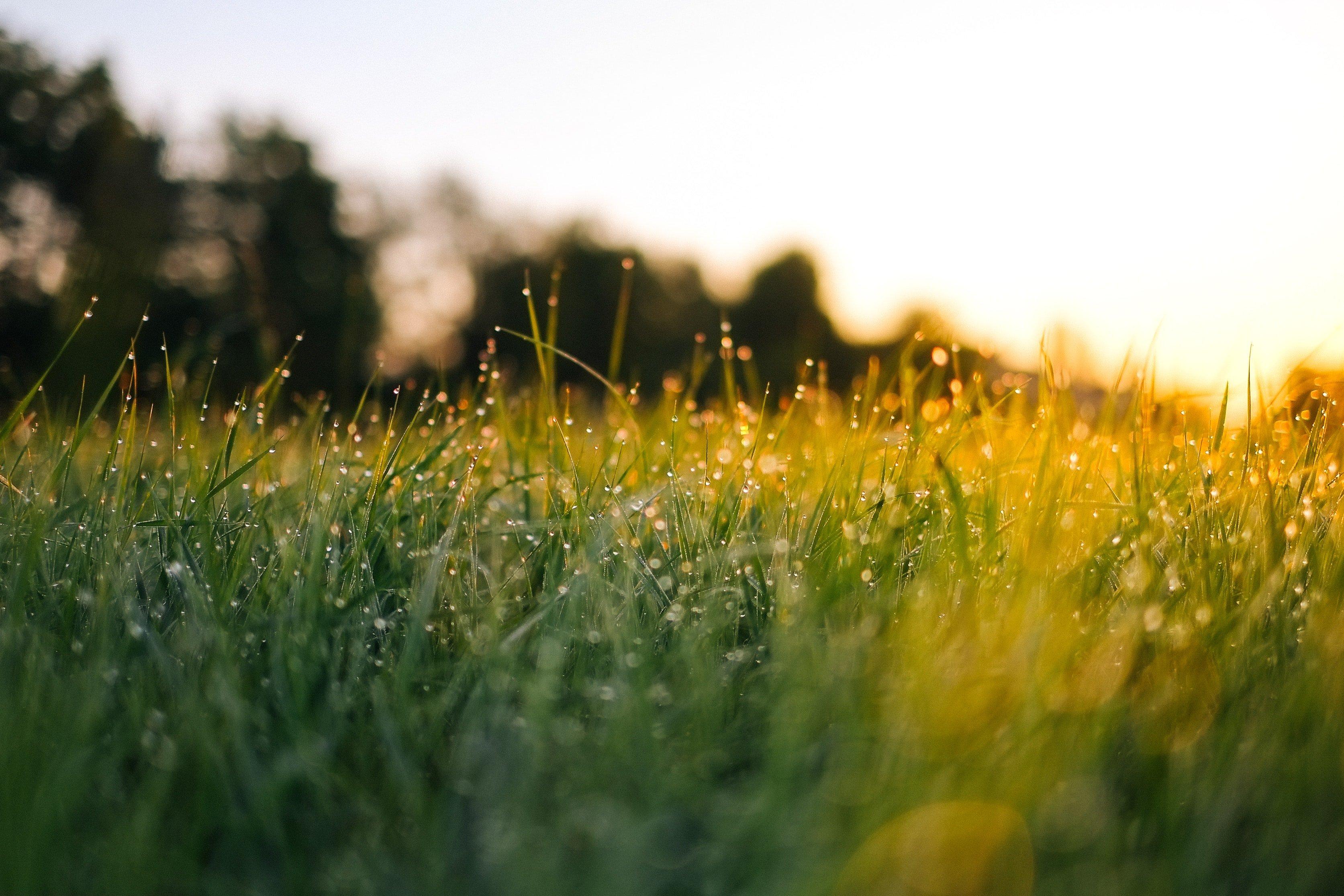 Grass on farm