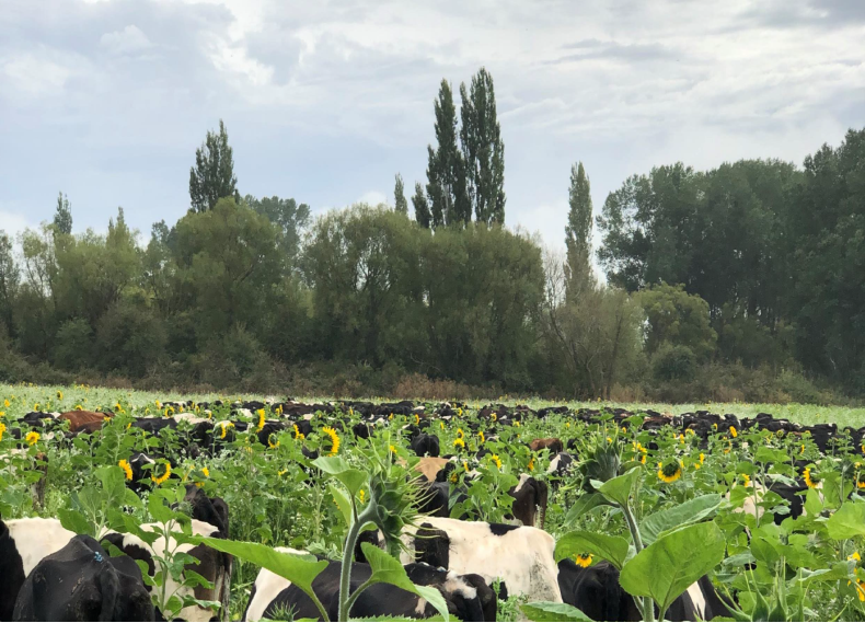 FarmWise regenerative ag flowers and cows
