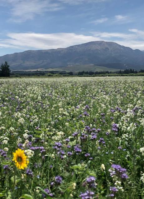 FarmWise regenerative ag flowers