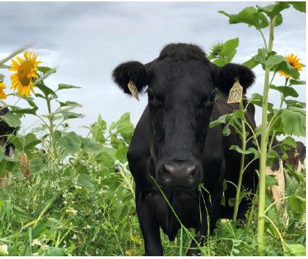 FarmWise rise of regenerative ag