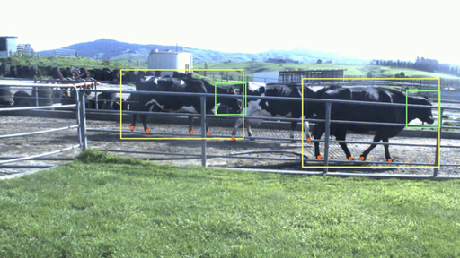 lameness detection AI