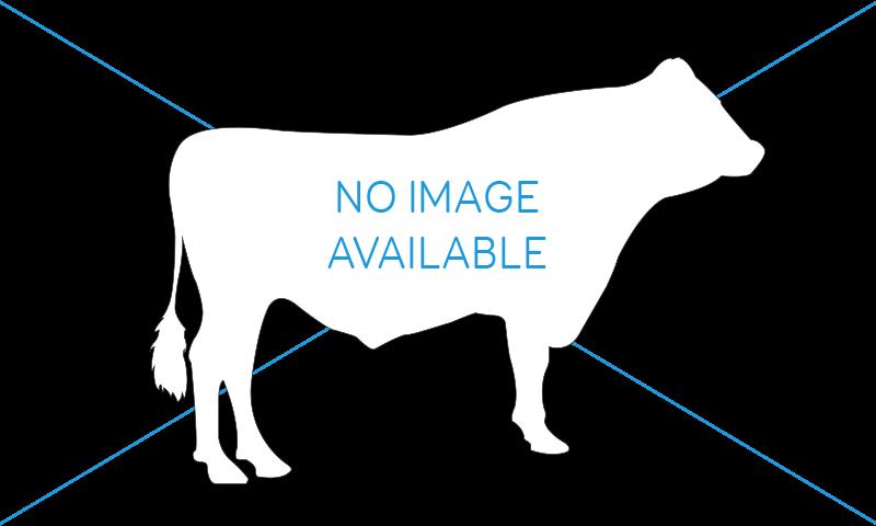 No Bull image